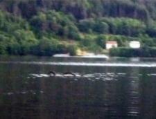 Aparitie neobisnuita pe un lac din Norvegia: un sarpe urias (Video)