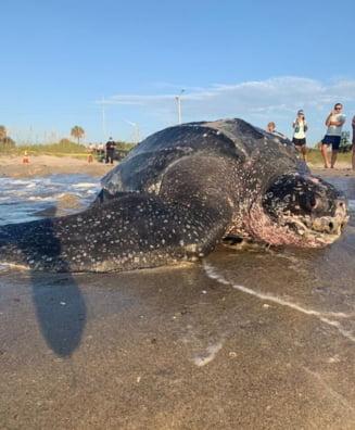 Aparitie surpriza pe o plaja din Florida: Este o anomalie!