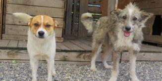 Apel al Fundatiei Pro Animalia privind gasirea unor gazde temporare pentru puii de caine fara stapani