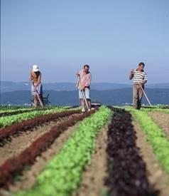 Aproape 3.000 de tineri s-au facut fermieri cu bani de la UE