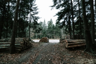 Aproape 400 de transporturi de lemn au fost declarate ilegale, in doar doua luni. Aplicatia Inspectorul Padurii, descarcata de peste 18.900 de utilizatori