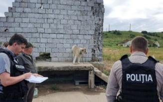 Aproape 70 de caini abandonati intr-o fosta ferma au fost ridicati de politistii de la Protectia Animalelor