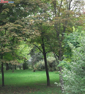 Arborii batrani din Arad, diagnosticati prin tomografii de catre specialisti din Ungaria