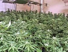 Argentina a legalizat consumul de marijuana