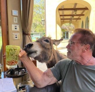 Arnold Schwarzenegger debuteaza pe micile ecrane. Va juca rolul unui agent sub acoperire intr-un serial de spionaj produs de Netflix