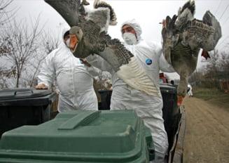"""Asemanari intre procesul """"Gripa aviara"""" si dezvaluirile privind pesta porcina. Ce s-a intamplat cu prejudiciul de milioane de euro"""
