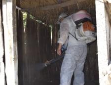 Asistentul medicului veterinar dezifecteaza cotetul unui porc ucis preventiv