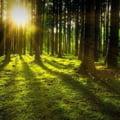 Asociatia Forestierilor, raspuns pentru Agent Green: Lucrarile forestiere desfasurate pe Valea Cerbului sunt perfect legale