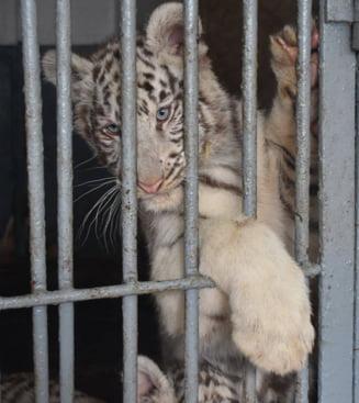 Asteptarea a luat sfarsit: Zoo Barlad se redeschide!