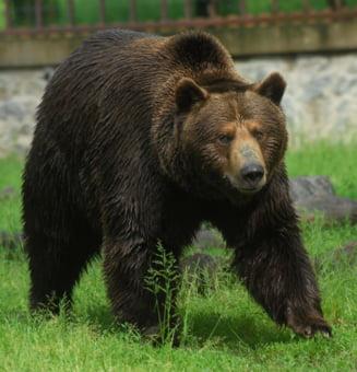 Atacul ursilor - cum ne ferim de ei