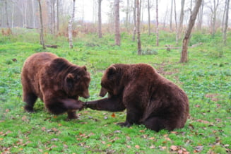 Atacul ursilor si lupilor asupra populatiei, considerat situatie speciala de urgenta