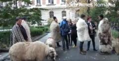 Au fost amendati ciobanii care au protestat la usa lui Daea: In Romania, cand vrei sa faci bine, statul te arde urgent