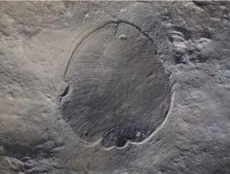 Au fost identificate cele mai vechi fosile de animale de pe Terra. Sunt mult mai vechi decat aratau toate ipotezele