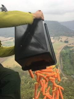 Australia arunca mancare din elicopter pentru animalele care au supravietuit incendiilor (Foto)