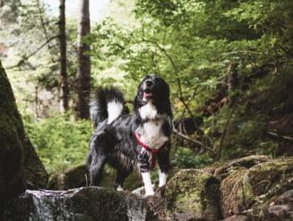 Bărbat rănit, care s-a rătăcit cu câinele în pădure, a fost salvat de jandarmii montani din Buzău