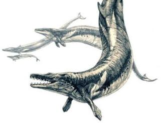 Balena din preistorie care avea 15 metri si se hranea cu alte balene