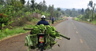 Bananele, cartofii viitorului - vezi ce vom mai avea in meniu