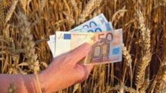 Bancile ridica in slavi agricultura, dar tot mai putine crediteaza fermieri