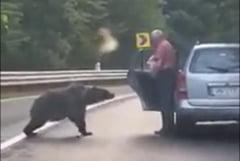 "Barbat filmat coborand din masina si hranind ursul in mijlocul unui drum montan din Vrancea. ""Cetatean inconstient"" VIDEO"