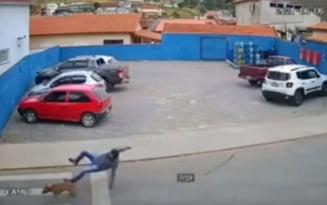 Barbat lovit violent de un caine pe trecerea de pietoni. Incidentul extrem de bizar produs in Botosani VIDEO