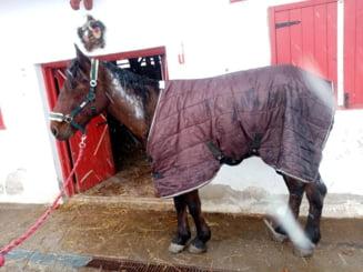 Barbatul care si-a incendiat calul si caruta ar putea fi arestat. Anchetatorii il acuza de schingiuirea animalelor