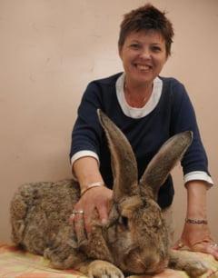 Benny, cel mai mare iepure din lume!