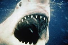 Bestii de acum 80 de milioane de ani populeaza inca Pamantul: Un rechin cu 300 de dinti a fost capturat in Portugalia
