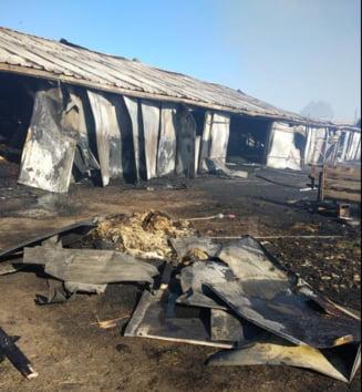 Bilantul macabru al unui incendiu izbucnit la o ferma din Suceava: peste 30 de vaci au ars de vii
