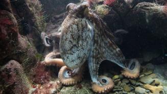 Biologii au descoperit ceva uimitor sub apa, ceva ce schimba ce se stia despre o specie foarte cunoscuta