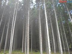 Blocarea exporturilor de masa lemnoasa nu rezolva problema taierilor ilegale
