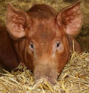 Bolile luate de la animale ucid anual 2,2 milioane de oameni
