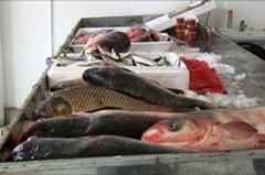 Braconaj piscicol si evaziune la pescarie, pe raza municipiului Fetesti