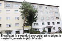 Brazi, pericol public in Visoi