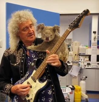 Brian May, chitaristul Queen, a cantat pentru un koala salvat din incendiu (Video)