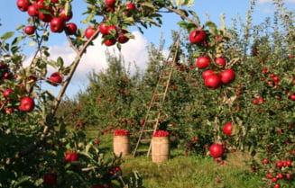 Britanicii refuza munca in agricultura - Cifrele care arata dezinteresul nativilor si nevoia de muncitori romani