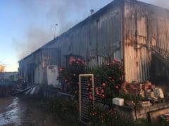 Brutarie din Tuzla, distrusa in totalitate de un incendiu. Cui apartinea afacerea si ce spune proprietarul despre nefericitul eveniment (galerie foto)