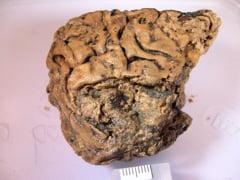 Bucata de creier care a supravietuit din Epoca Fierului