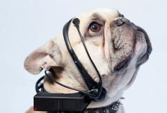 Bucurie pentru iubitorii de animale: S-a inventat tehnologia care traduce latratul cainilor (Video)