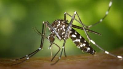 Cât de periculoși sunt țânțarii purtători de virus West Nile. Procedura complicată prin care este depistată infecția în corp
