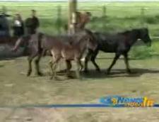 Caii de la Letea, salvati