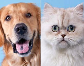 Cainele sau pisica - cine e mai destept, mai rezistent, mai rapid?