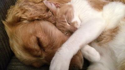 Caini versus pisici. Care sunt mai inteligenti, iubitor sau mai usor de crescut