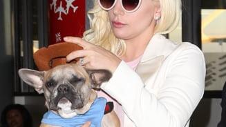Cainii lui Lady Gaga au fost gasiti. La cine ar putea ajunge recompensa de 500.000 de dolari