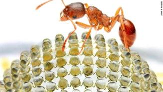 Camera foto a viitorului, inspirata de vederea insectelor - Ce o face sa fie revolutionara