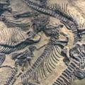 Cand a avut loc prima extinctie in masa de pe Terra si cat a durat