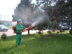 Cand incepe dezinsectia in municipiul Giurgiu. Zonele unde se vor efectua tratamentele