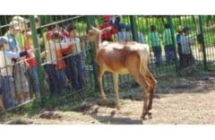 Cand se redeschide Gradina Zoologica la Galati?