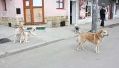 "Cand va scapa Constanta de cainii maidanezi: ""Eutanasiem jumatate din ei"""