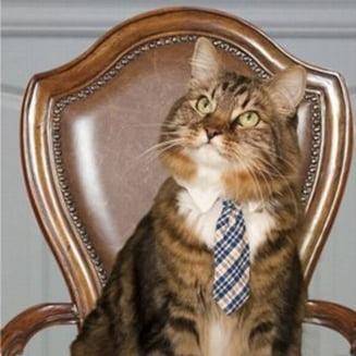 Candidat surpriza la alegerile din SUA: O pisica vrea sa fie senator de Virginia