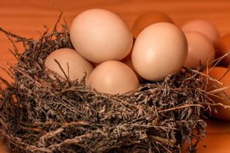 Care este tara de unde Romania importa cele mai multe si cele mai ieftine oua
